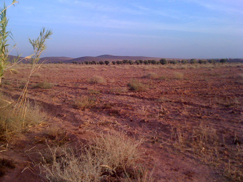 Lands for sale in Marrakech